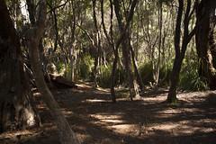 Little Deadmans Bay