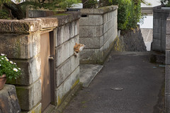 howl woof woof (kasa51) Tags: dog woof japan fence alley kanagawa 犬 路地 hoel 国府津 kōzu わおーんわんわん