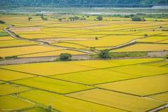 - Golden rice field - Waipu - Taichung (prince470701) Tags:  goldenricefield sonya99 sony1635za sigma70300mm  waipu  dajiacreek  taichung taiwan