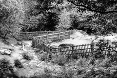 67/100x - Zigzag Fence (Nomis.) Tags: canon eos 700d t5i rebel canon700d canoneos700d rebelt5i canonrebelt5i monochrome mono bw blackandwhite 100x 100xthe2016edition 100x2016 image67100 sk201607149147editlr sk201607149147 lightroom fence alderleyedge stormypoint outdoor zigzag uneven fencing barrier woods trees cheshire woodland