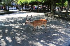 IMG_1497 (wjs5715.thomaswu) Tags: 日本 廣島 宮島 日本三景