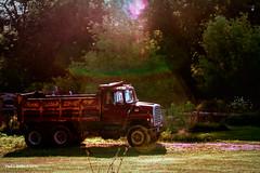 Sun Bathing  ....HTT! (jackalope22) Tags: red sun yellow truck rainbow rust dump spot htt