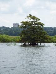 5 River Delta Alabama (102) (Stonehenge 68) Tags: 5riversdelta mobile delta wildlife alligator duck pelican water waterhyacinth hemlock snowyegret alabama