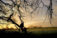 Nature's Abstract. (elam2010) Tags: morning trees winter shadow england sky abstract clouds zeiss rural landscape dawn countryside branches sony silhouettes treetrunk a7 wirral