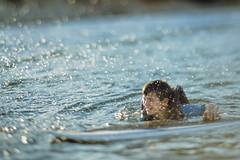 wake surfer splash (Elle_Zee) Tags: lensbaby edge 80 optic