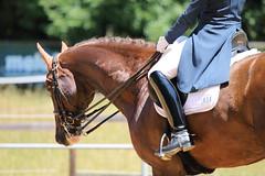 IMG_4894 (dreiwn) Tags: horse pony horseshow pferde pferd equestrian horseback reiten horseriding dressage reitturnier dressur reitsport dressyr dressuur ridingclub ridingarena pferdesport reitplatz reitverein dressurreiten dressurpferd dressurprüfung tamronsp70200f28divcusd jugentturnier