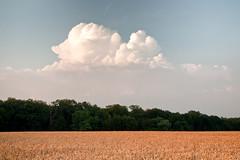 Summer harmony (Vitatrix) Tags: outdoor natur nature wolken landschaft landwirtschaft himmel