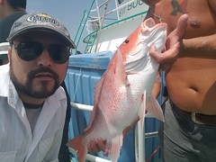 Houston Deep Sea Fishing (Transwestern) Tags: transwestern commercialrealestate realestate cre recreation fishing deepseafishing redsnapper youngprofessional youngprofessionals transwesternyoungprofessionals team teambuilding galveston gulfofmexico professionaldevelopment bptw bestplacestowork bestplacetowork