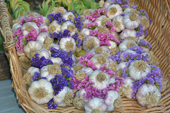 garlic braids and statice in basket (champbass2) Tags: california usa garlic gardening fromthegarden garlicbraids statice flowers creative everlasting healthyeating