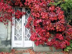 Autumn Doorway. (Flyingpast) Tags: wb2000 tl350 autumn fall leaves nature red crimson colour door building pollokhouse glasgow scotland scottish nationaltrust visitscotland wet season doorway entrance park