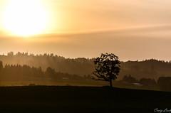 Oregon Sunset (Mr. Craigs Legs) Tags: oregonsunset craiglash nikond7000 oregon sunset sigma50150 tree