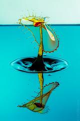 Splash Art. Water drop collision photo. Double impact shot (sfrancis23) Tags: water drop collision double impact flash yongnou560iii drip crown spike splashart strobist highspeedflash blue yellow green red colours nikon d800 180mm nacro sigma