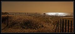 LES CARRELETS DE ST MICHEL CHEF CHEF (Odile ENTRE MER ET MONTAGNE) Tags: carrelets mer sea coucherdesoleil plage sable seascape stmichelchefchef peche paysage paysdeloire