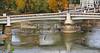 Bald Eagle by Y Bridge in Zanesville Ohio   5765 (intricate_imagery-Jack F Schultz) Tags: jackschultzphotography intricateimageryphotography amishcountry ohioamish southeasternohio zanesvilleohio ybridge