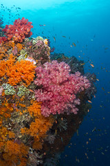 DSC_2400 (Mgungen) Tags: underwater underwaterphotography colourful nikon d7100 subal tokina 1017 inon z240 indonesia rajaampat diving scuba wideangle ocean sea blue reef coral misoolecoresort batbitim
