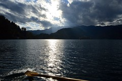 Catching slight waves (TanaPerin) Tags: rowing lake bled sunset julian alps