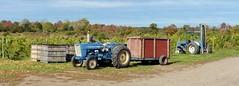 'harvest time' (Ed_PFF) Tags: fingerlakes harvest vineyard wine tractor rural winery mileswinecellars