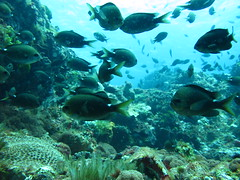 IMG_0878 (JustinField-Greens) Tags: marinepark lordhoweisland ballspyramid mtgower