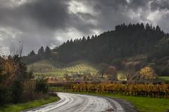 The Road to Preston Vineyard and Farm #2 (Tom Moyer Photography) Tags: california vineyard vines fallcolor sonomacounty winecountry drycreekvalley