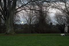 DSC05247 (SteveFE) Tags: park dusk moonrise hereford 28 industar61 53mm