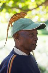 Fidisol with chameleon on head