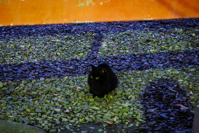 Today's Cat@2015-01-26