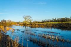 River Stour, Little Canford, Dorset