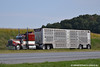 Kenworth W900A Cattle Hauler (Trucks, Buses, & Trains by granitefan713) Tags: tractor livestock kw 18wheeler kenworth tractortrailer bigrig cattlepot w900 w900a trucktractor kenworthtruck cattlehauler kenworthw900 amodelkenworth bullhauler kenworthw900a