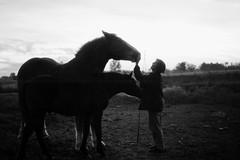 The Sensational Susan (Nicholas den Haan) Tags: ohio horses people blackandwhite film animals analog portraits 35mm vintage midwest minolta kodak silhouettes farmland americana magichour goldenhour