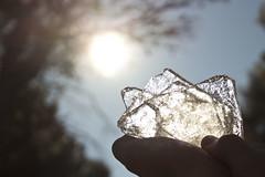 Gel / Ice (irispuag) Tags: light naturaleza sun detalle detail reflection tree ice luz sol nature reflex moss natura reflejo rbol catalunya arbre gel hielo catalua llum detall vacarisses