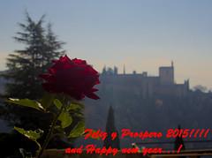 Feliz y Prospero 2015 (puesyomismo) Tags: new pink blue red mist flower verde green rot tallo castle fleur rose azul pine rouge happy rojo stem pin year flor rosa newyear vert pet