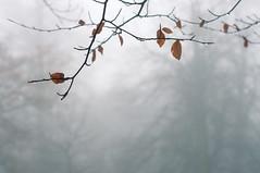 Still Winter (Ida H) Tags: morning blue trees winter cold nature leaves fog closeup early seasons branches seasonal foggy minimal icy minimalism minimalist