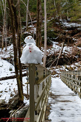 Tammy's 1st Snowman - Big Possum Creek Bridge - Possum Creek Gorge Section of the Cumberland Trail (mikerhicks) Tags: winter usa ice geotagged unitedstates hiking tennessee flattopmountain soddydaisy cumberlandtrail tennesseestateparks cumberlandtrailstatepark bigpossumcreek canon7dmkii sigma18250mmf3563dcmacrooshsm geo:lat=3535461833 geo:lon=8517282667 possumcreekgorgesection threegorgessegment bigpossumcreekbridge
