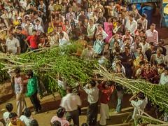 Gujarat : Rupal, Ghee Festival #25 (foto_morgana) Tags: people india asia belief hinduism pilgrimage gandhinagar gujarat rupal gheefestival