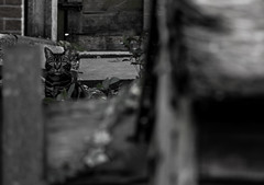 Cat (The Riley Shot) Tags: wood blackandwhite pet beautiful cat fence garden photography photo eyes funny shed therileyshot