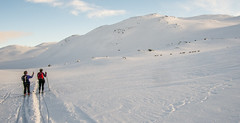 Langredslbere og rensdyr (Jahoa12) Tags: norge vinter sne fjeld landskab hovden bjerg austagder langrend rensdyr bykle winnijrgensen agnetegudnason