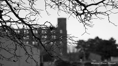 B&W Tree by MES (starlightomaha) Tags: street new blue trees light panorama orange sun white black cold color building tree ice water beautiful weather rock bulb photography photo cool intense nebraska colorful pretty photographer angle serious time object bricks pipe ring rings land omaha subject pan 2015