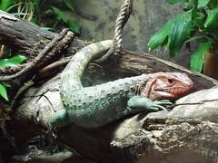DSCF0170 (Stonehenge 68) Tags: zoo birmingham snake alabama lizard plantation antebellum birminghamzoo arlingtonhouse