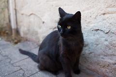 witchy cat (SanctyYumi) Tags: france animals cat blackcat chat minou flin