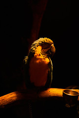 The Muted Parrot (Jed Tsui) Tags: parrot night low light sony a6300 animal muted bird potrait opus15 15
