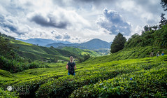 Cameron Highlands - Malaysia (melvinjonker) Tags: malaysia cameron highlands fields tea landscape landscapephotography landscapelovers landscapeperfection trees plants nature naturelovers naturephotography leaf leaves sky skylovers clouds dof mountains composition