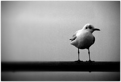 0013 (play with light and shadow) Tags: sw black white meer möwe weite endlos einfarbig