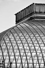 rooflight (Harry Halibut) Tags: 2016andrewpettigrew allrightsreserved contrastbysoftwarelaziness noiretblanc blackwhite blancoynegro blanc weiss noire schwatz bw zwart wit bianco nero branco preto imagesofsheffield images sheffieldarchitecture sheffieldbuildings colourbysoftwarelaziness south yorkshire sheffield botanical gardens pavilion greenhouse galsshouse glass roof wood steel curve curvy sheff1608085563 restored victorian