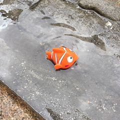 Nemo (svennevenn) Tags: fish rain toys nemo bergen fisk leker