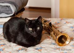 O gato e o saxofone (Ivan Costa) Tags: black cat bed preto gato cama sax saxophone saxofone