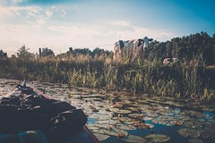 DSCF2576 (peterulrich.net | Berlin Webdesigner) Tags: spree brandenburg kajak kayak kajaktour kayaktour kajaktrip kayaktrip gumotex gumotexswing2 kanu schlauchkajak peterulrichnet 2016 august schlauch fluss river