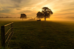 A gate to light (uw67) Tags: morgenstimmung gatter tor morningmood achterhoek licht sunrise sommer light