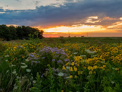 20160723-IMG_0004 (MandoCatDSM) Tags: sunflowers badger creek wildflowers sunrise