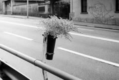 Andate piano ragazzi! (sirio174 (anche su Lomography)) Tags: fiori flowers como road strada caraccident incidente morti dead incidenteautomobilistico