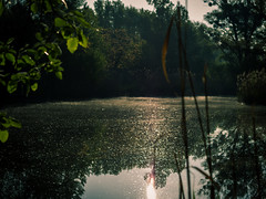 Bewitched (#201) Tags: sonnenaufgang gegenlicht wald natur see lake nature sunrise wood wien sterreich at
